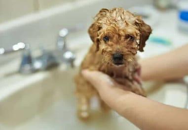 Como escolher o melhor shampoo para cachorro?
