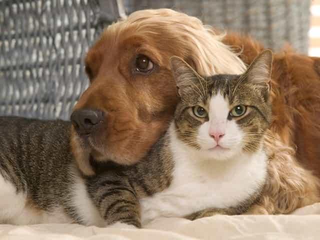 um cachorro e um gato
